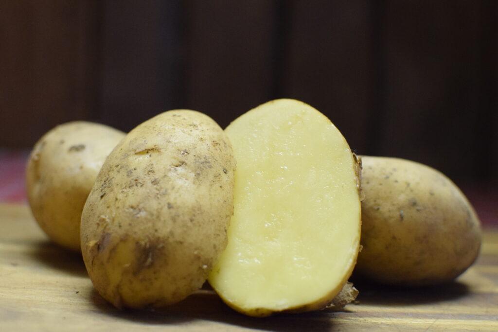 Kartoffelsorte Talent
